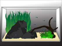 Aquascape Stock Image
