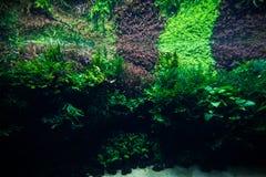 Aquascaping του όμορφου φυτευμένου τροπικού του γλυκού νερού ενυδρείου Aquaworld Στοκ Εικόνες