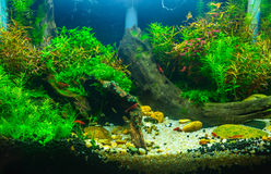 Aquascaping av det planterade akvariet Royaltyfria Foton