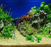 Aquascaping av det planterade akvariet Arkivfoton