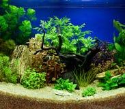 Aquascaping av det planterade akvariet Arkivfoto