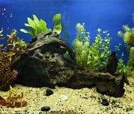 Aquascaping av det planterade akvariet Royaltyfri Foto