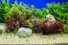 Aquascaping of the beautiful Stock Image