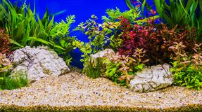Aquascaping of the beautiful planted tropical freshwater. Aquarium royalty free stock images