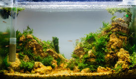 Aquascaping of the planted aquarium Stock Photos