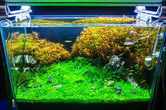 Aquascaping of the planted aquarium Royalty Free Stock Photos