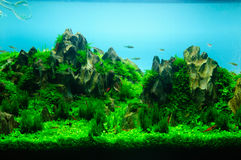 Aquascaping of the planted aquarium Stock Images