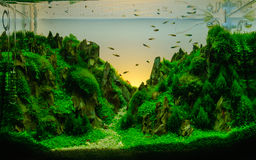 Aquascaping of the  planted aquarium Royalty Free Stock Image