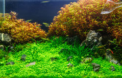 Aquascaping of the planted aquarium Stock Photography