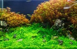 Aquascaping of the planted aquarium Stock Photography