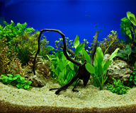 Aquascaping of the planted aquarium Royalty Free Stock Photo