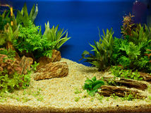 Aquascaping of the planted aquarium. Aquascaping of the beautiful planted tropical freshwater aquarium Royalty Free Stock Photo