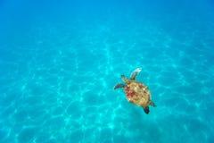 aquasköldpadda Arkivfoton