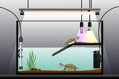 Aquaterrarium 免版税库存照片