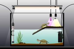 Aquaterrarium. Schematic representation of the terrarium. Terrarium equipment. Vector illustration Royalty Free Stock Photos