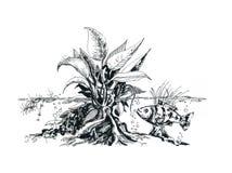 Aquaterrarium teckning Barbus fisk vektor illustrationer