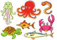 Aquatic animals Stock Image