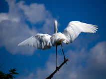 Aquatic bird Stock Images
