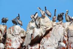 Free Aquatic Birds Royalty Free Stock Images - 50387089