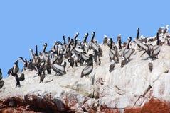 Free Aquatic Birds Royalty Free Stock Photography - 50387397
