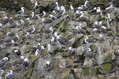 Aquatic birds, Ballestas islands, Peru Stock Image