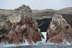 Aquatic birds, Ballestas islands, Peru Stock Photos