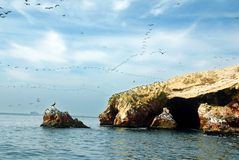 Aquatic birds. At Paracas National Reservation, or the Peruvian Galapagos. At the reserve there are the Islas Ballestas, islands which are off limits to people royalty free stock images