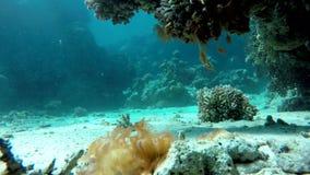 Aquatic,  The corals and fish. stock video