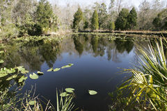 Aquatic Environment Stock Photo