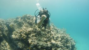Aquatic exploration with a scuba diver. A wide shot of a scuba diver exploring the coral reefs. The diver is suited with a diving gear stock footage