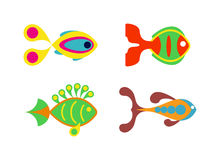 Aquatic fish wildlife aquarium underwater nature tropical seafood animal vector. Royalty Free Stock Images
