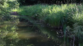 Aquatic Hidden Pond stock footage