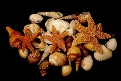 Aquatic life Stock Photos