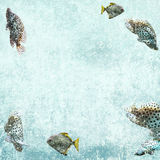 Aquatic life background with tropical fishes Royalty Free Stock Images