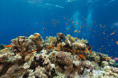 The aquatic life in the Red Sea. Stock Images