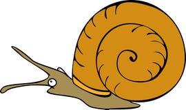 Aquatic mollusk planorbidae Royalty Free Stock Image