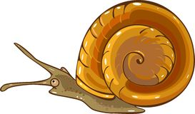 Aquatic mollusk planorbidae Stock Images