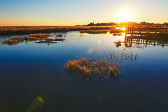 The aquatic plant in lake sunset Royalty Free Stock Photo