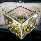 Aquatic plant in a water cube Royalty Free Stock Image