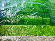 Aquatic plants inside Erhai lake Royalty Free Stock Photo