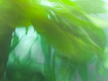 Aquatic plants nature background pattern texture. Green submerged aquatic plants underwater blurry nature abstract background texture pattern Royalty Free Stock Photos