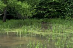 Aquatic plants in shallow water stock photo