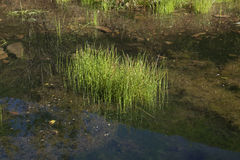 Aquatic Pond Stock Image