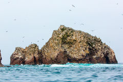 Aquatic seabirds in Peru,South America, coast at Paracas National Reservation  Stock Photos