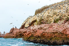 Aquatic seabirds in Peru,South America, coast at Paracas National Reservation, Peruvian Galapagos. Ballestas Islands. Stock Photos