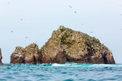 Aquatic seabirds in Peru,South America, coast at Paracas National Reservation, Peruvian Galapagos. Ballestas Islands. Stock Image