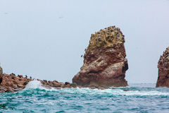 Aquatic seabirds in Peru,South America, coast at Paracas National Reservation, Peruvian Galapagos. Ballestas Islands Stock Image