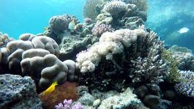 Aquatic, Tropical fish. stock video
