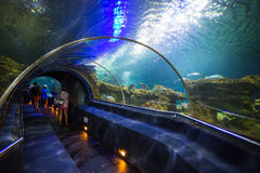 Aquatic tunnel in the Loro parque aquarium Stock Photo