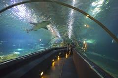 Aquatic tunnel in the Loro parque aquarium Royalty Free Stock Photography
